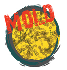 MOLD-IMAGE1
