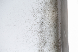 Mold Removal Company Lawrenceville, GA