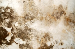 Black Mold Removal Atlanta GA