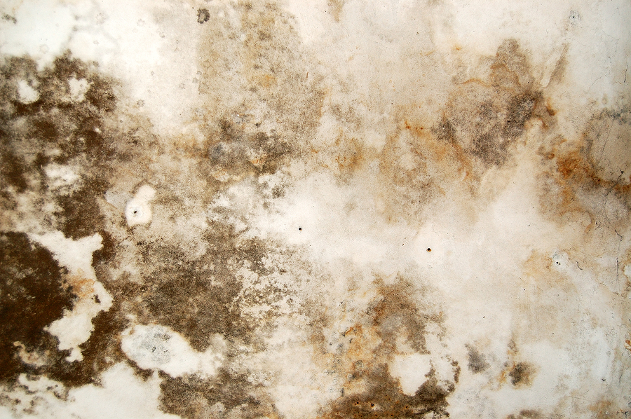 Black Mold Removal Services Atlanta Ga