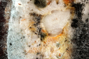 Mold Removal Companies Roswell, GA