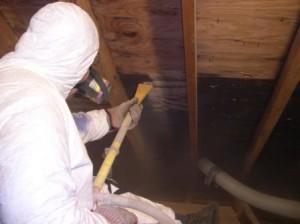 Mold Removal Companies Lawrenceville GA