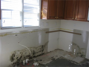 mold-pic